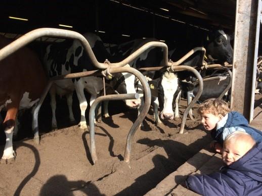 koeien en kinderen